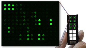 All Antibody Arrays on Sale