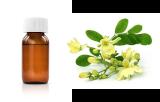 Moringa oleifera (cMOL)