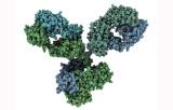 Primary antibodies