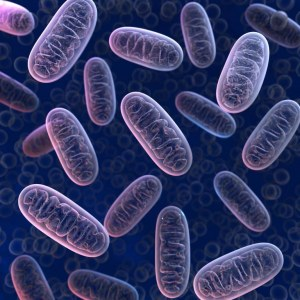 Mitochondrial bioactive peptides