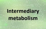 Assay kits - Intermediary metabolism